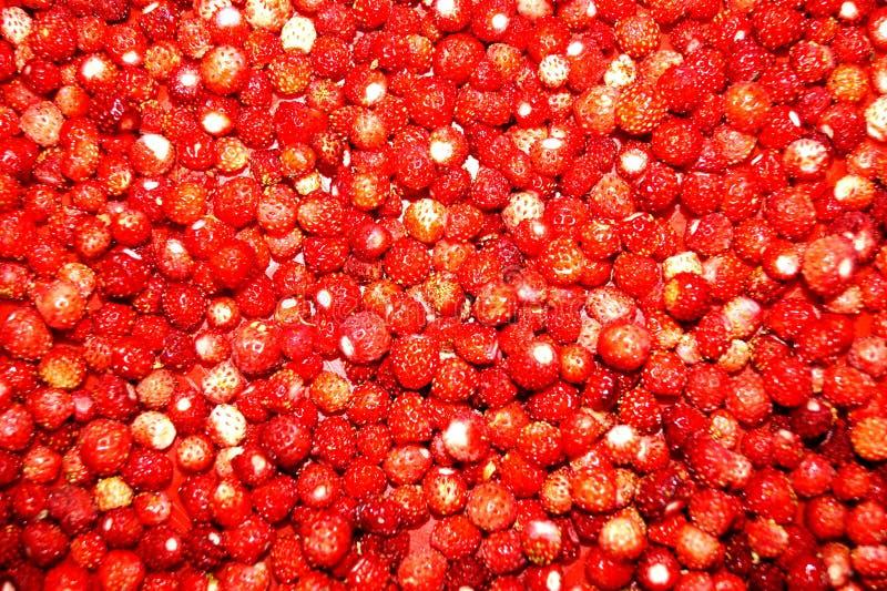 Bright, red wild strawberry. Texture. Desktop Wallpaper royalty free stock photo