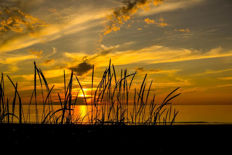 Bright and saturated sea sunset through the black silhouettes of grass ears. Picturesque sea sunset, filled with rich yellow and orange color. In the foreground stock photography
