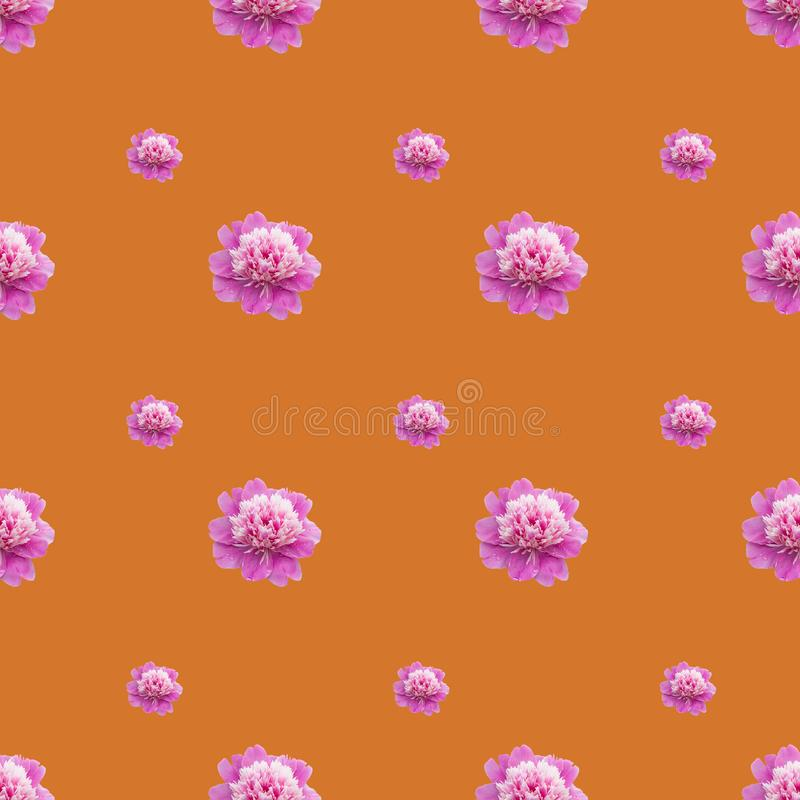Bright  seamless pattern with pink peonies on orange background. Bright gentle seamless pattern with pink peonies on orange background, flower, wallpaper, floral royalty free stock image