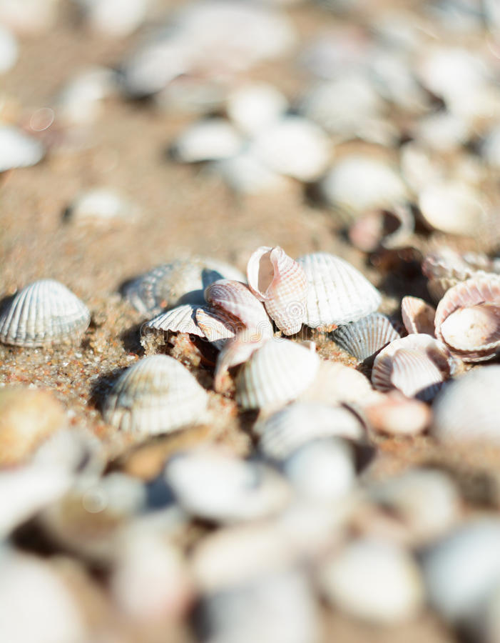 Bright seashells on the seashore. Beautiful seashells on the beach. Twisted shell beige yellow and pink colors. Shells lying on the sand royalty free stock photography