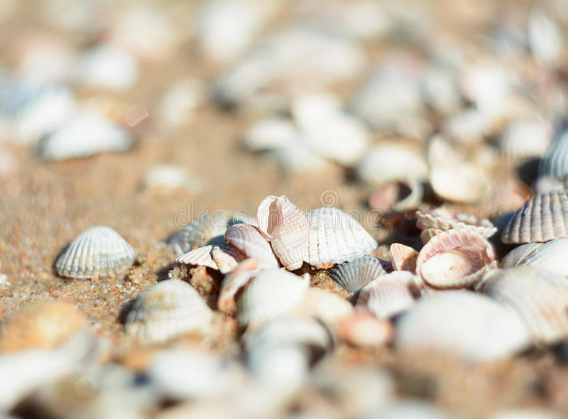 Bright seashells on the seashore. Beautiful seashells on the beach. Twisted shell beige yellow and pink colors. Shells lying on the sand stock image