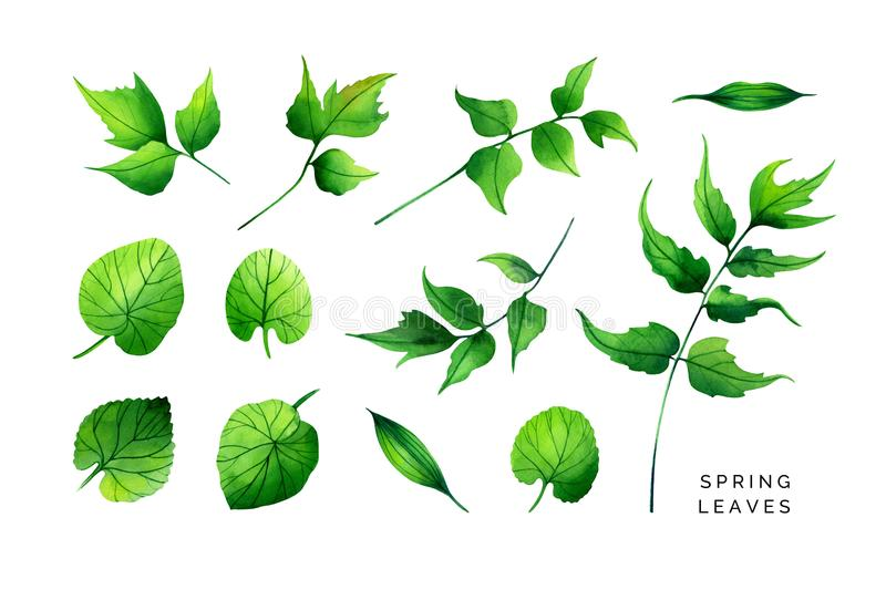Bright set of spring leaves. Viola, host, marsh-marigold and holly fern. stock photos