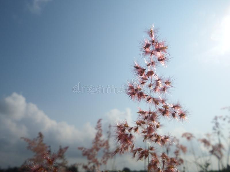 Bright sky and beauty in nature. royalty free stock photography
