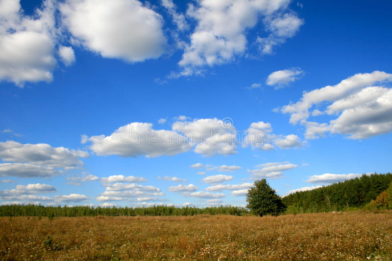 Bright sky, trees and clouds. Summer sky with fluffy white clouds and one tree were photographed near Kiev (Ukraine, Europe royalty free stock photo