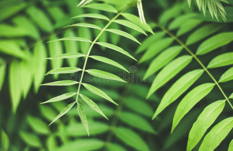 Bright soothing green leaves background, nature beauty royalty free stock photos