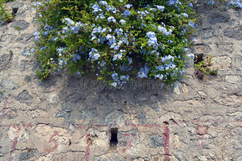Bright southern flowers 2. Bright southern flowers, stone wall, a combination of live and dead, old stonework, small Italian seaside town, sea, blue sky, travel royalty free stock image