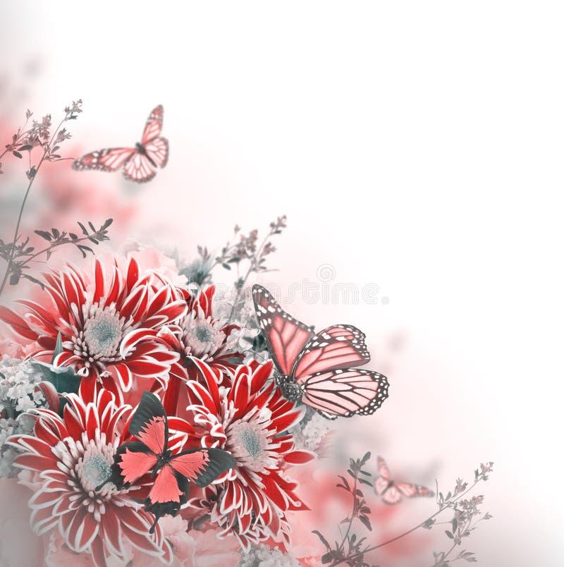 Free Bright Spring Chrysanthemum Stock Photos - 42241033