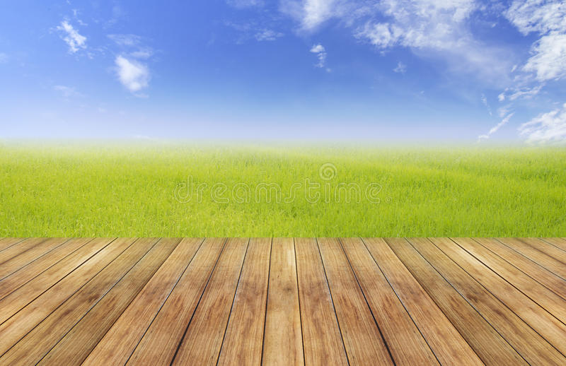 Bright spring with nature rice field background perspective wooden plank royalty free stock images