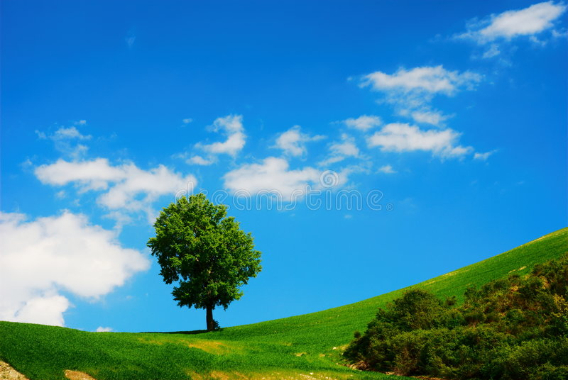 Bright summer. Landscape with green field and blue sky stock photo