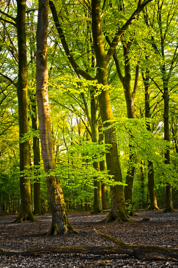 Free Bright Summer Forest Stock Photo - 5622230