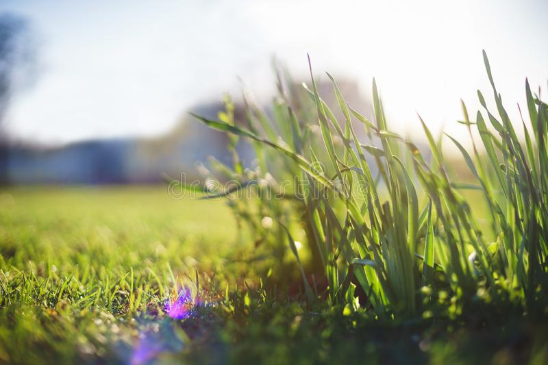 Bright summer lawn with high fresh green grass extreme close-up. Rest on the nature on a hot summer day. Soft focus and beautiful bokeh. Magical place for a royalty free stock photo