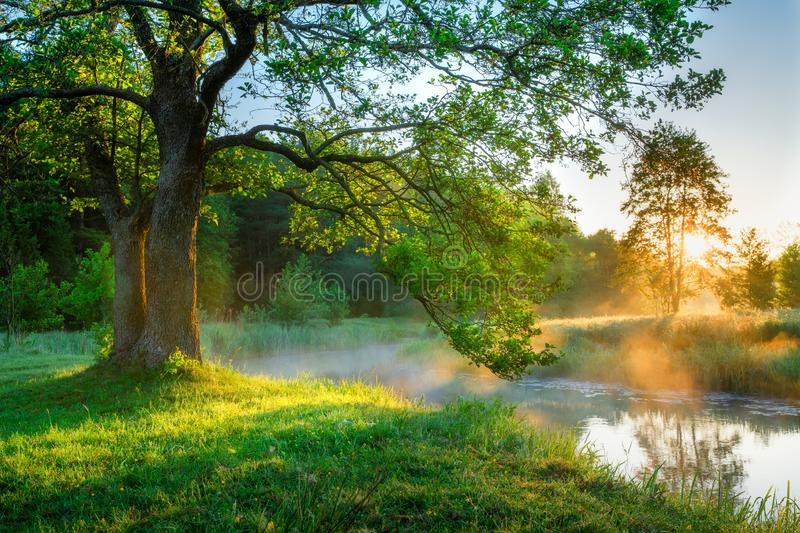 Bright summer morning by the riverside stock photo