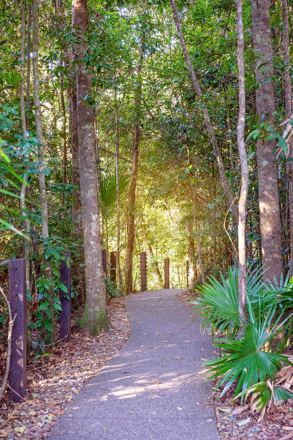 Bright Sunlight At End Of Rainforest Walking Track stock image