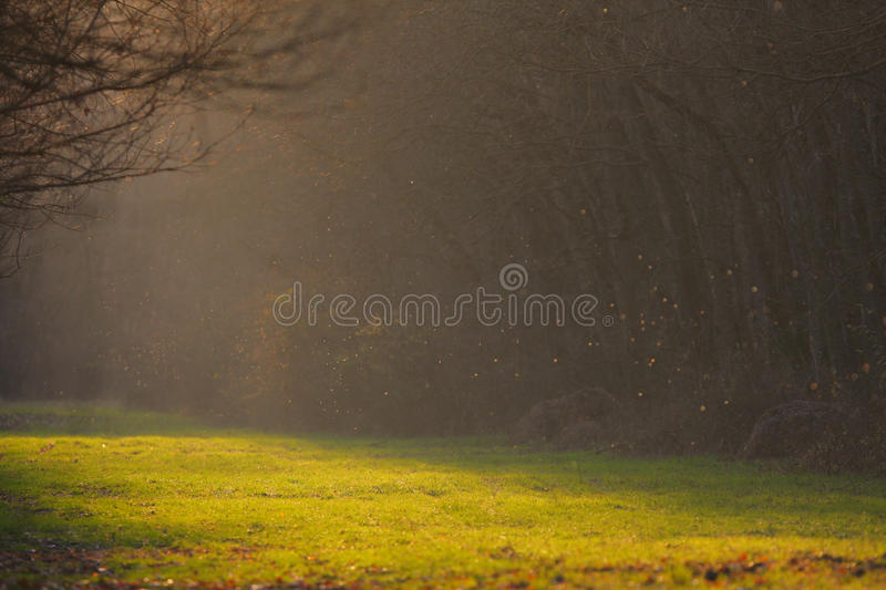 Bright Sunlight On Forest Path In Autumn Royalty Free Stock Photo