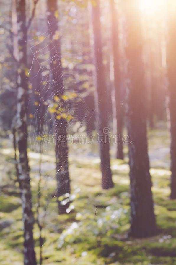 Blurry view of autumn forest. Bright sunlight shining among trees in woods royalty free stock photo