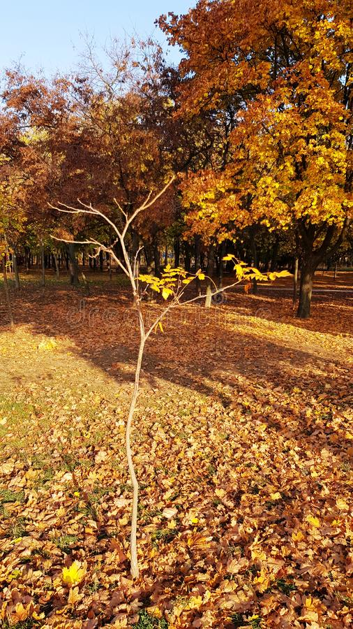 Bright sunlight on small bare tree with thin branches royalty free stock image