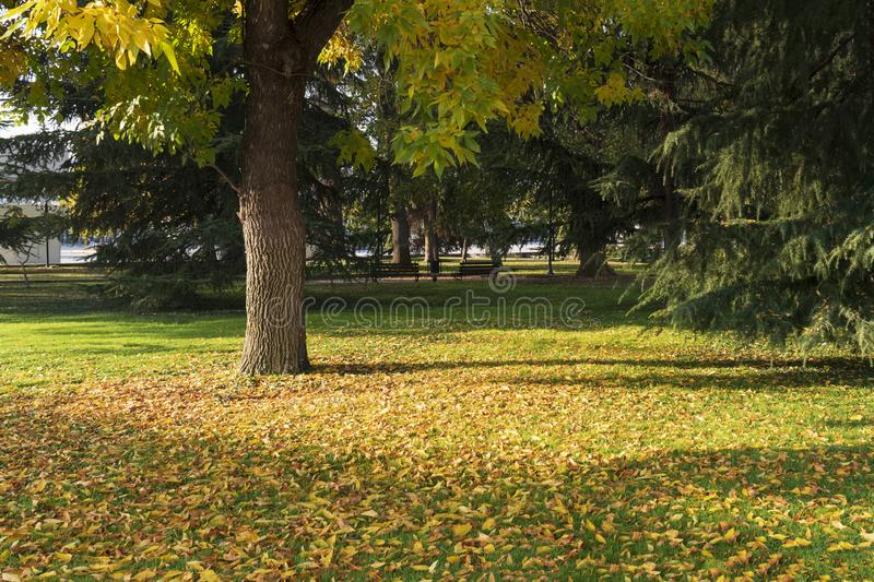 Bright sunny autumn city landscape. A beautiful colorful tree and fallen leaves under it. he city of Plobdiv. Bulgeria stock photo