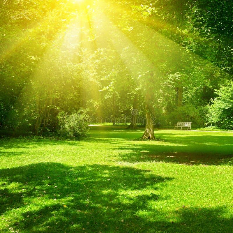 Bright Sunny Day In Park. The Sun Rays Illuminate Green ...