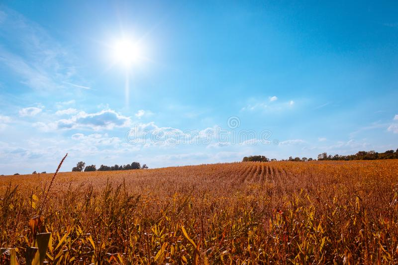 Bright sunny fall day on a Michigan Farm. Looking out over a field royalty free stock photo