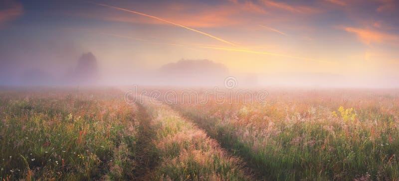 Bright sunrise on autumn meadow. Foggy autumn morning. Fresh autumn nature. Bright sunrise on autumn meadow royalty free stock photography