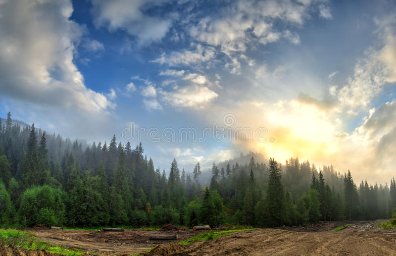Bright sunrise in the fog and clouds in the mountainous landscape. Surrounded by spruce trees near the mountain road stock images