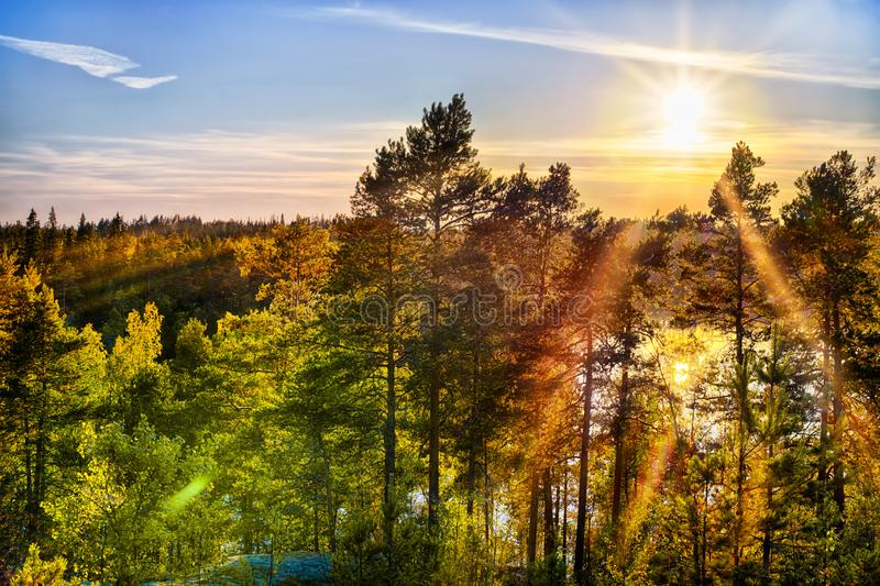 Bright sunset sun over deep forest royalty free stock photo