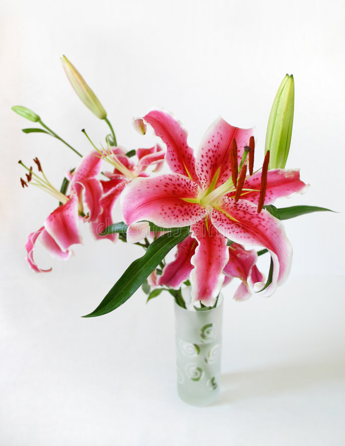 Free Bright Tiger Lilies Stock Images - 126944