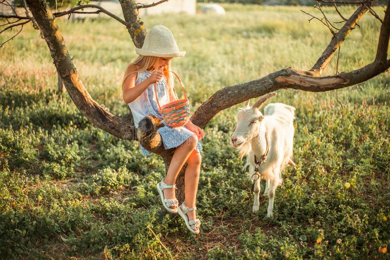 Bright Ukrainian girl with long blond hair in a hat and dress on a farm. Girl 6 years old at sunset sits on a tree and feeds a royalty free stock image