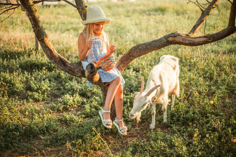 Bright Ukrainian girl with long blond hair in a hat and dress on a farm. Girl 6 years old at sunset sits on a tree and feeds a royalty free stock photos