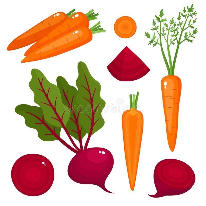 Bright vector illustration of beetroot, carrot isolated on white. Bright vector illustration of colorful beetroot, carrot. Fresh cartoon organic vegetable vector illustration