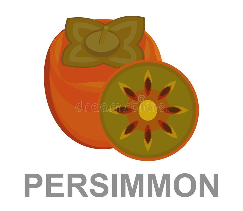 Bright vector illustration of colorful half and whole of juicy persimmon. Fresh cartoon persimmon royalty free illustration