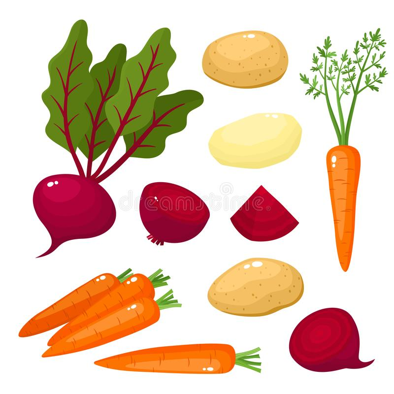 Bright vector illustration of colorful turnips, beets, potato, carrots. Bright vector illustration of colorful turnips, carrots, potato, beets. Fresh cartoon royalty free illustration