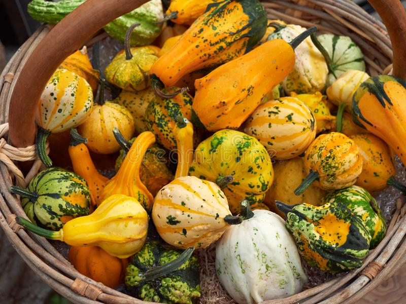 Bright vegetables in a wooden basket. zucchini royalty free stock photography