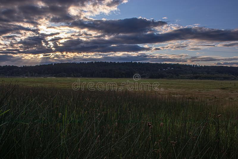 Vibrant cloudy sunset over a thick dark green wetland full of reeds tall grass and streams of water stock images