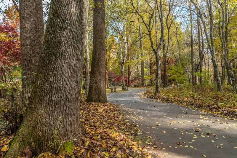 Walking trails at a park in autumn stock photo