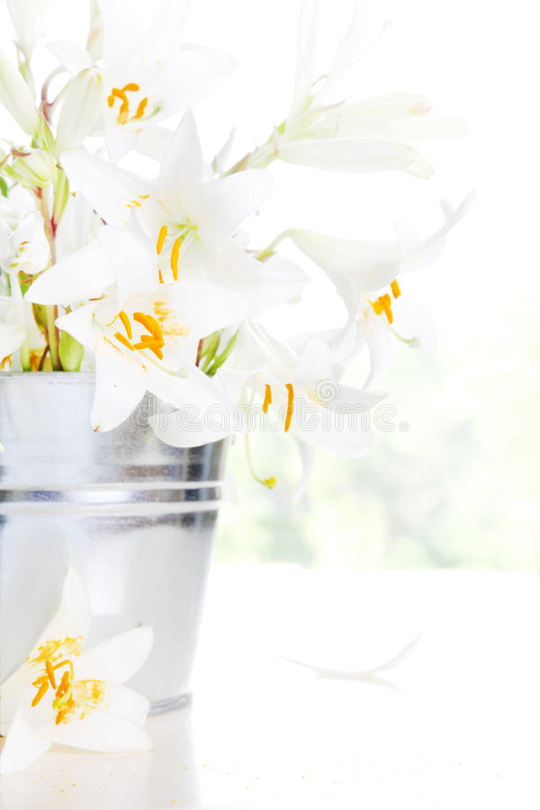 Download Bright White Lily stock photo. Image of beautiful, present - 25387466