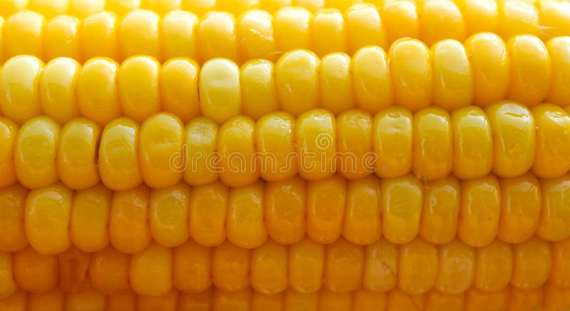 Bright yellow buttered corn cob background royalty free stock image