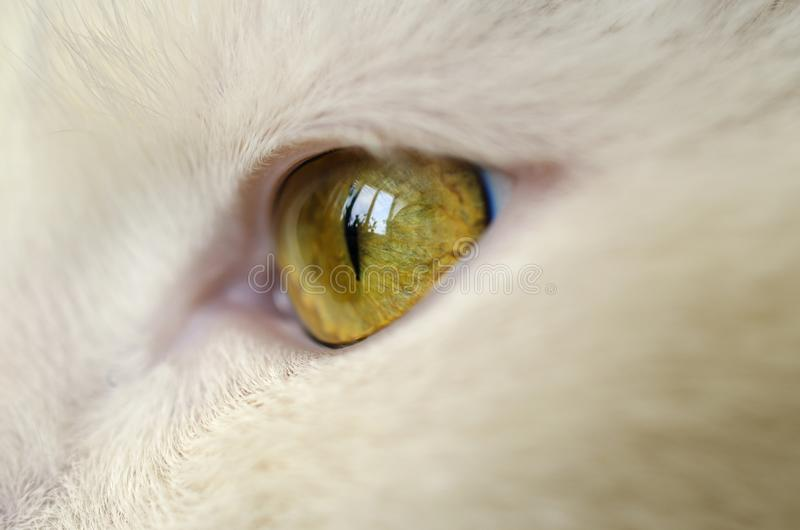 Bright yellow cat eye royalty free stock image