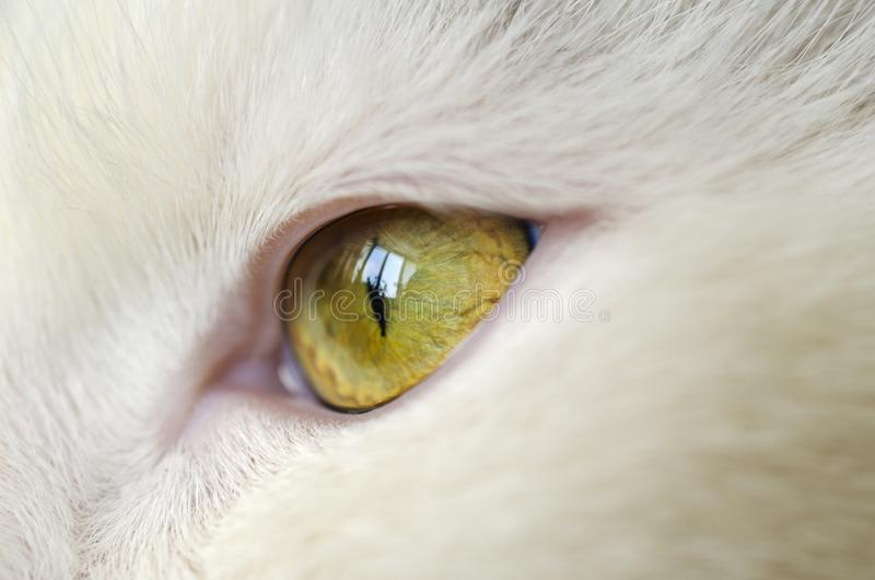 Bright yellow cat eye royalty free stock images
