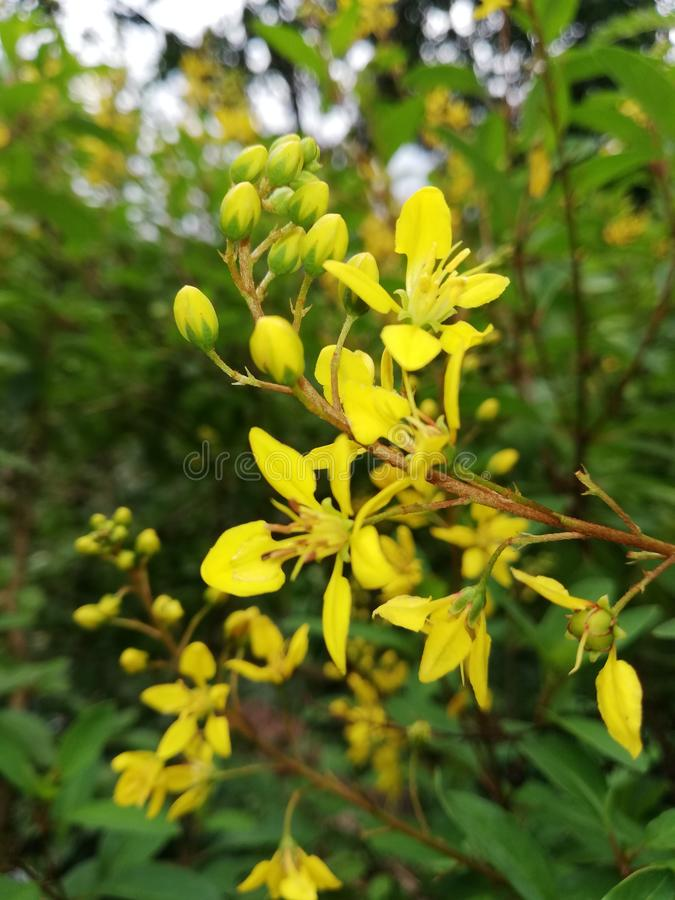 Bright yellow colour flowers. These are a bright yellow colour flowers in the garden stock photo