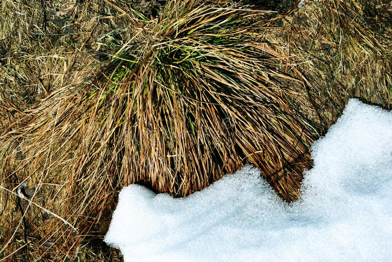 Bright yellow dry grass one side covered with white snow, natural background royalty free stock images