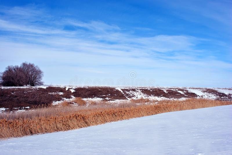 Bright yellow dry reeds on hills of river bank covered with snow, trees without leaves on horizon, blue cloudy sky. Background royalty free stock images