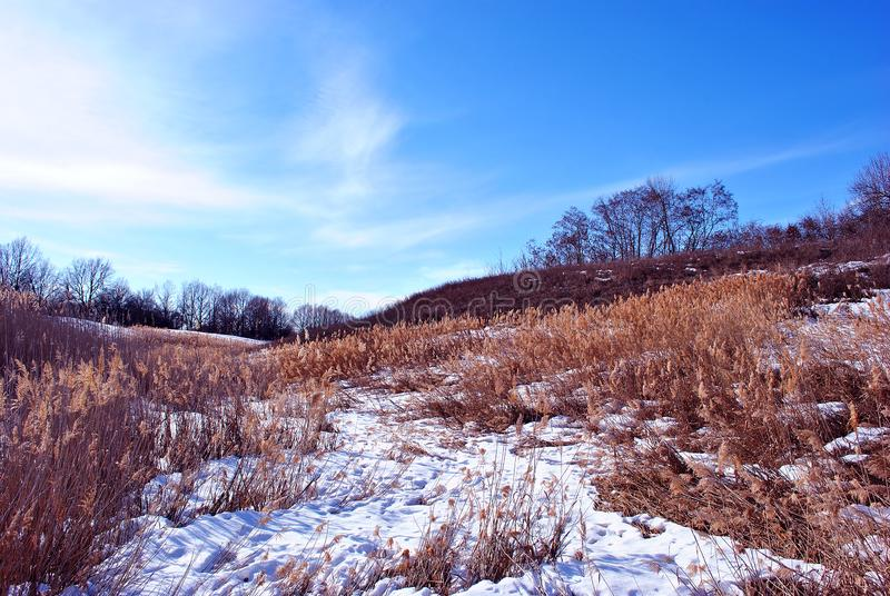 Bright yellow dry reeds on hills of river bank covered with snow, trees without leaves on horizon, blue sky background stock photo