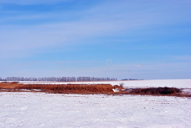 Bright yellow dry reeds on river bank on meadow covered with snow, trees line on horizon, blue sky. Background royalty free stock photo