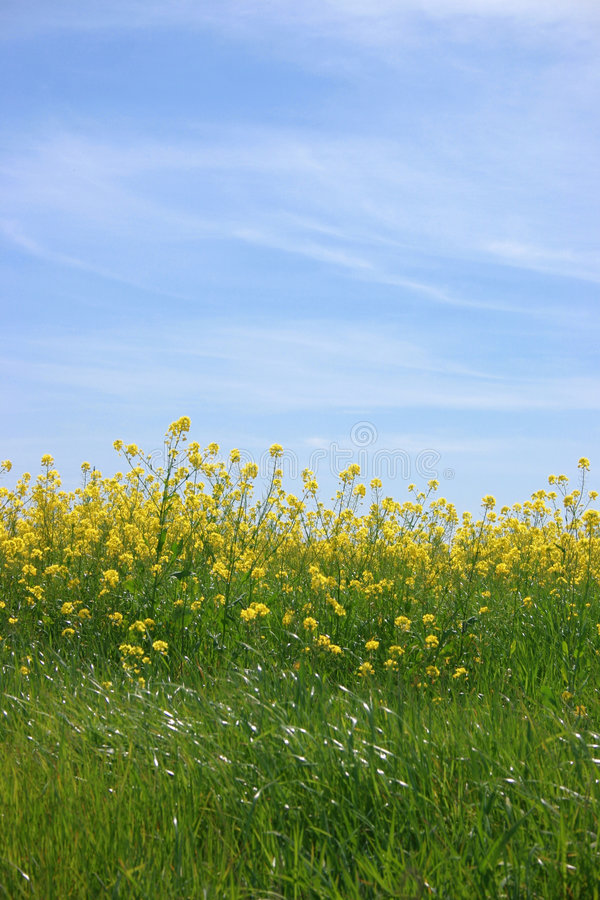 Bright Yellow Flowers Beneath the Light Blue Sky stock photos