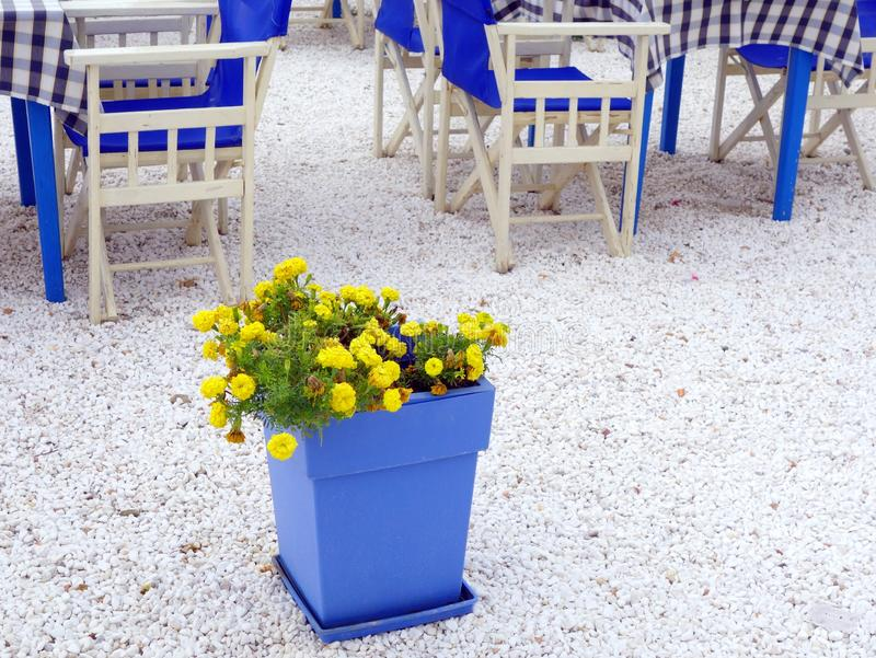 Yellow Flowers in Deep Blue Pot, Thassos, Greece. Bright yellow flowers contrasting with deep blue flower pot, on marble chip covering of floor of taverna royalty free stock photography