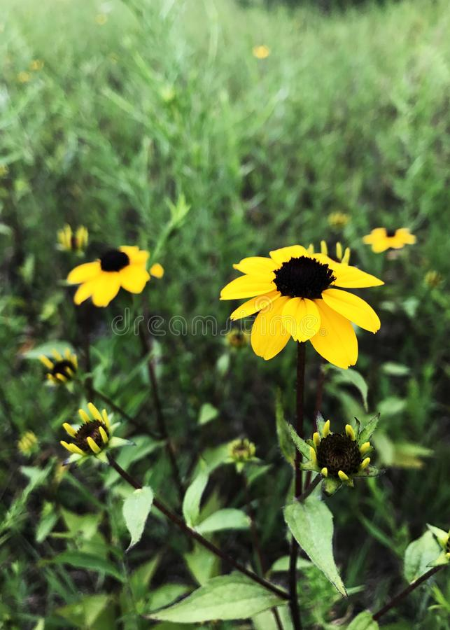 Yellow flowers standing tall in the long grass stock photo image download yellow flowers standing tall in the long grass stock photo image of flowers mightylinksfo