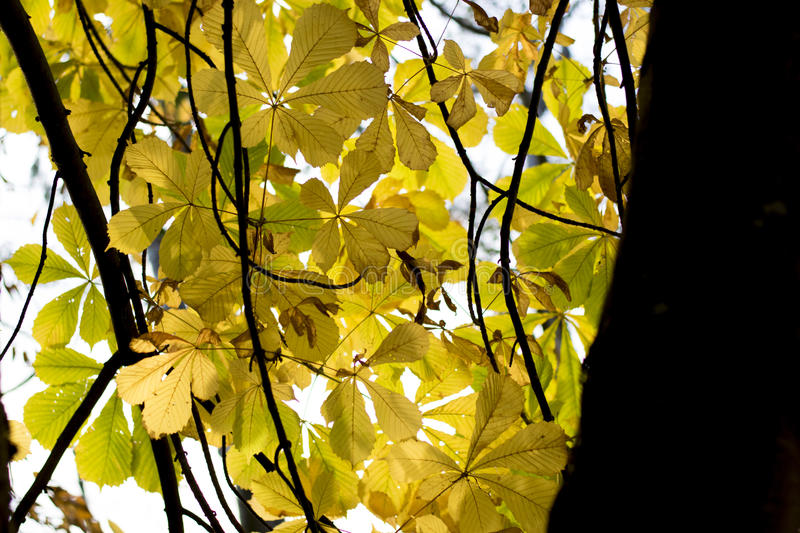 Bright yellow leaves stock photography