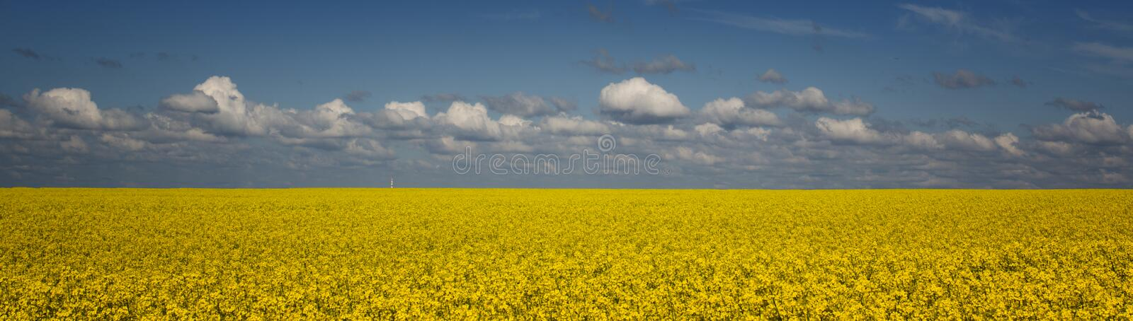 Bright yellow rapeseed field against a blue sky with clouds royalty free stock photos