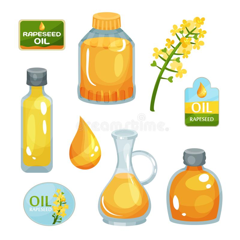 Bright-yellow rapeseed flower, vegetable oil in bottles of various forms, drop of liquid and branding labels. Natural vector illustration